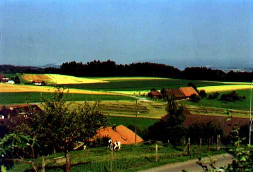 Muhleberg farms
